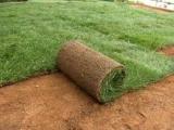 ΓΚΑΖΟΝ ΧΛΟΟΤΑΠΗΤΕΣ ΚΗΠΟΙ ΚΑΤΑΣΚΕΥΕΣ έτοιμο γκαζόν φυσικό  χλοοτάπητας έτοιμος φυσικός  κηποι κατασκευη τοποθέτηση